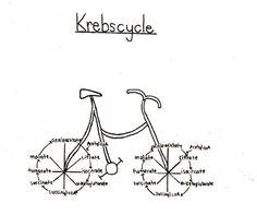 The krebs cycle Biology Jokes, Medical Jokes, Chemistry Jokes, Biology Lessons, Ap Biology, Molecular Biology, Medical School, Science Cartoons, Science Puns