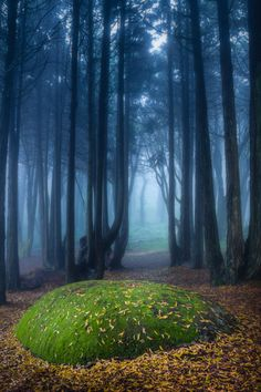 Mystical Forest, Sintra, Portugal