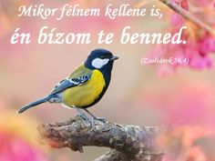 nem_felek_1846867_7114.jpg (960×720)