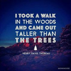 Walk in woods taller than trees