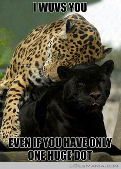 Fun Claw - Funny Cats, Funny Dogs, Funny Animals: Funny Animal Pictures With Captions - 24 Pics lol! Love the one huge dot :)! I Love Cats, Big Cats, Crazy Cats, Cats And Kittens, Silly Cats, Funny Animal Memes, Funny Animal Pictures, Funny Animals, Cute Animals