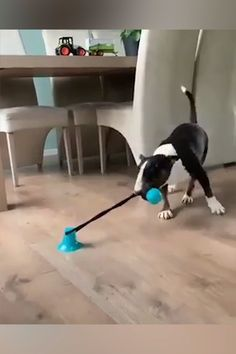 This toy will stand its ground and keep your dog entertained for hours! Just stick the suction cup end on any open area and let your pup at it! Cute Funny Animals, Funny Dogs, Chien Bull Terrier, Dog Items, Dressage, Mans Best Friend, Dog Friends, Animals Beautiful, Animals And Pets