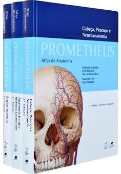Sangue/ Sistema Cardiovascular/ Sistema Circulatório/ Aula Anatomia Humana/ Site Anatomia