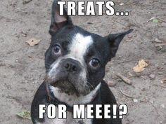 Love Treats?