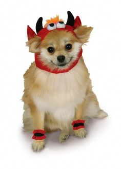 Silly Monster Devil Dog Costume - Bring out the little devil in your pet this Halloween with this cute devil pet costume.  This soft velour head has ear openings and gathered elastic at back of head allows for versatility in fit. An orange tuff of hair, big bulgy eyes and black horns turn your angel into a light hearted devil! There are four little leg warmers, a triangular shaped tail is attached to the back of the head piece.  #devil #yyc #costume #pets