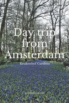 Guide to a day at Keukenhof gardens in Lisse, The Netherlands.
