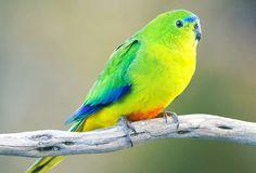 Futurity.org – In captivity, rare birds suffer empty nests