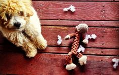8 Super Tough Toys For Dogs Who Destroy Everything | Cuteness.com