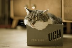 {fashion catwear}