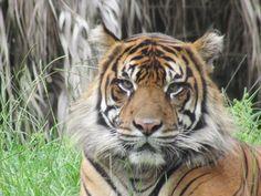 Hay animales que con su mirada representan grandeza, respeto y miedo.