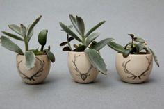 Antler Cups by Jessie Lazar. Rustic centerpieces.