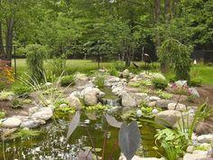Garden Ponds|Ecosystem Fish Ponds|Water Gardens|Pond Contractors|Rochester NY -  Acorn Ponds & Waterfalls