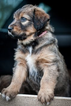 Cute Dogs #dogs #pets #canine #puppies