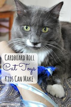 Make fun interactive cat toys from cardboard rolls! These super easy pet projects are great for kids and make awesome gifts for cat lovers too. #MyCatMyMuse [ad]