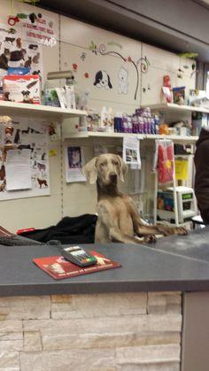 Buongiorno, posso aiutarvi?