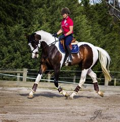 This horse is for sale. [[MORE]] Viscount  Height- 17 hhAge- 7 yoPrice- $35,000 17hh WB stallion. 30/12/2006. By Copabella Visage out of TB mare. This is The most regrettable sale of any horse I have ever had. Marty was bred here and educated here. He has the most beautiful temperament. He is a gentleman in every way. To ride him he is obedient and so obliging and works foot perfect every time I sit on him. He is well educated on the flat with lovely laterals established and perfect ...