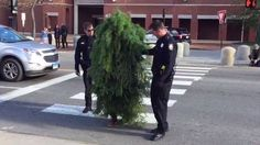 Why Did the Man Dressed as a Tree Cross the Road?