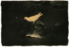 Tori, meaning bird in Japanese, is Masao Yamamoto's sixth exhibition at Yancey Richardson Gallery and reflects the artist's lifelong obsession with birds. The show includes both hand printed photographs, spanning Yamamoto's career, as well as new additions of traditional hanging scrolls.