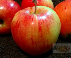 Apple Recipes: Simple recipes with apple, fresh apple recipes, apple pie recipes, apple crisp recipe, apple halwa desert recipe and various indian and american style apple recipes. Apple Crisp Recipes, Fruit Recipes, Desert Recipes, Easy Indian Recipes, Easy Recipes, Easy Meals, Fresh Apples, Simple, Collection