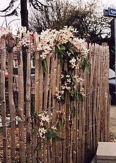 kastanjehek / willow or chestnut branches gate