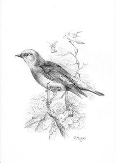 Bird  Original Graphite Pencil Drawing  by GraphiteArtStudio, £20.00