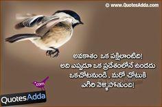 life quotes facebook wall Telugu Nice Learning Quotations QuotesAddacom Telugu Quotes