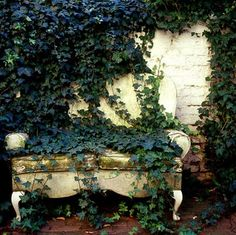 I LOVE ivy. It would have to be EVERYWHERE in my dream garden.