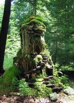 Its a little moss hideaway! gardening