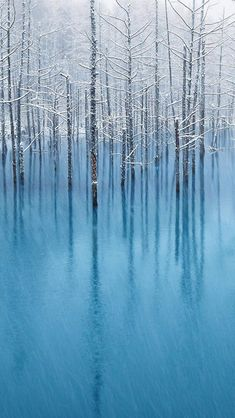 """Snow in turquoise pond, Hokkaido, Japan   ~     """"My dream is the dream of a pond ~ Not just to mirror the sky ~ But to let the willows and ferns ~ Suck me dry. ~ I'll climb from the roots to the veins, And when leaves wither and fade ~ I will refuse to mourn ~ Because I was dying to live.""""        Shu Ting       ~   @Elsa Davern"""