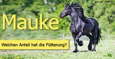 Mauke beim Pferd - Ursache, Behandlung und Vorbeugung