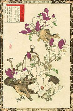 Kono Bairei Album of Flowers and Birds 1st Edition 1883