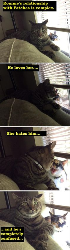 Guys, even cats don't understand women!