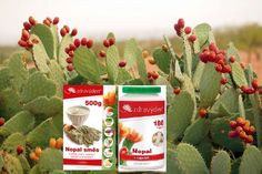 Nopal Opuncia - newly discovered superfood. Finaly I have choosen tabletes and I lose weight and my musles not suffer and I still have lot of energy :o))