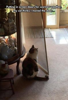 Funny Animal Pictures of The Day Release 8 (57 Pics) - FunRare I Love Cats, Crazy Cats, Cute Cats, Silly Cats, Animals And Pets, Funny Animals, Cute Animals, Funniest Animals, Funny Cat Memes