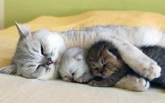 Kitty family.