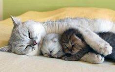 Kitty family.
