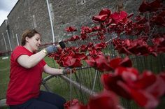 12 Stunning Pictures Of The Ceramic Poppies Outside The Tower Of ...