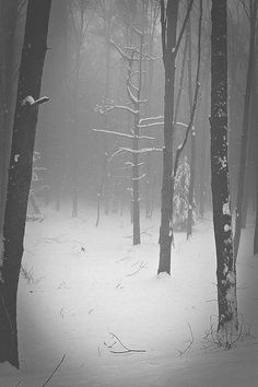 forest, snow, and winter image Look Dark, Mystical Forest, Foto Real, My Sun And Stars, All Nature, Winter Beauty, Winter Scenes, Belle Photo, Beautiful World