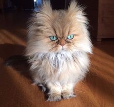 The Serious Fluff | 24 Of The Fluffiest Animals In The World