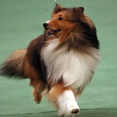 I am beautiful ~ YOU SURE ARE, LOVE IT WHEN THEIR COAT FLOWS LIKE THIS WHEN THEY RUN ~