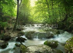 Enchanting Forest waterfall mural wallpaper