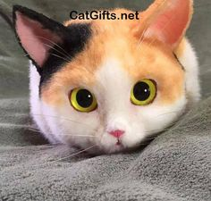 Visit CatGifts.net to see more cool cat photos and videos