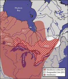 Lake Sturgeon Distribution - Great Lakes, Western St. Lawrence as described in the following paragraphs