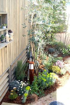 Garden Spaces, Succulents Garden, Dream Garden, Garden Inspiration, Garden Landscaping, House Plants, Backyard, Exterior, House Design