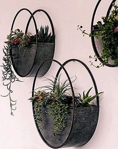 beautiful hanging plants ideas for home decor - Page 38 .- beautiful hanging plants ideas for home decor – Page 38 of 42 – SooPush hanging plants, indoor plants, outdoor plants - Plant Wall Decor, House Plants Decor, Wall Of Plants Indoor, Hang Plants On Wall, Indoor Plant Decor, Hanging Plant Wall, Sun Plants, Tomato Plants, Hanging Baskets