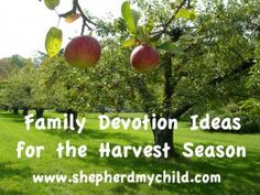 Devotion Ideas for the Fall Harvest Season