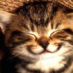 Image result for images of smiling cats
