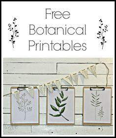 Free Watercolor Botanical Printables- Free Printable Friday - Twelve On Main Free Printable Art, Free Printables, Printable Quotes, Decoration, Art Decor, Decor Ideas, Diy Ideas, Room Ideas, Party Ideas