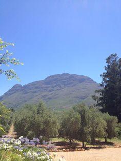 Tokara wine estate South Africa, Dolores Park, African, Wine, Mountains, Nature, Travel, Voyage, Viajes