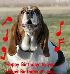 Happy birthday bassett hound pictures images photos woo woo birthday greetingshappy birthday cardsbirthday wishesbirthday partiesbasset dogbassett houndbirthday bookmarktalkfo Gallery